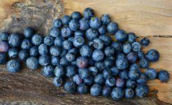 Toto jsou čučoriedky. Slovensky borůvky.