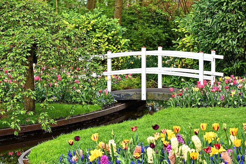Voda a tulipány patří k symbolům Nizozemí.
