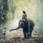 Maj maj, královská rodina a další zajímavosti z thajštiny